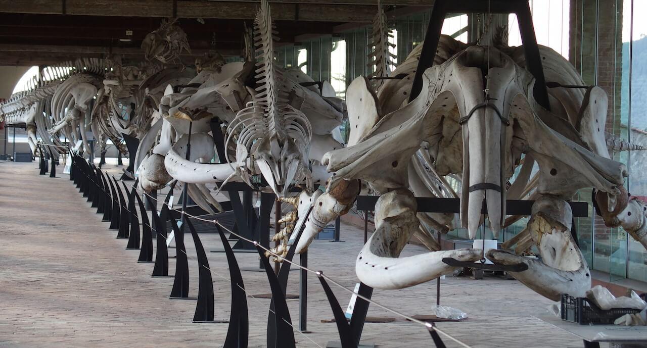 Calci |Museo di Storia Naturale dell'Università di Pisa