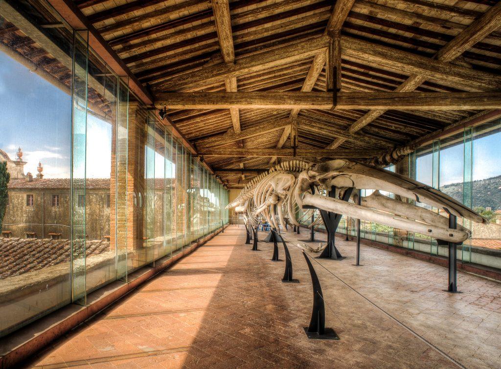 Galleria dei Catacei | Museo Storia Naturale | Calci | Terre di Pisa