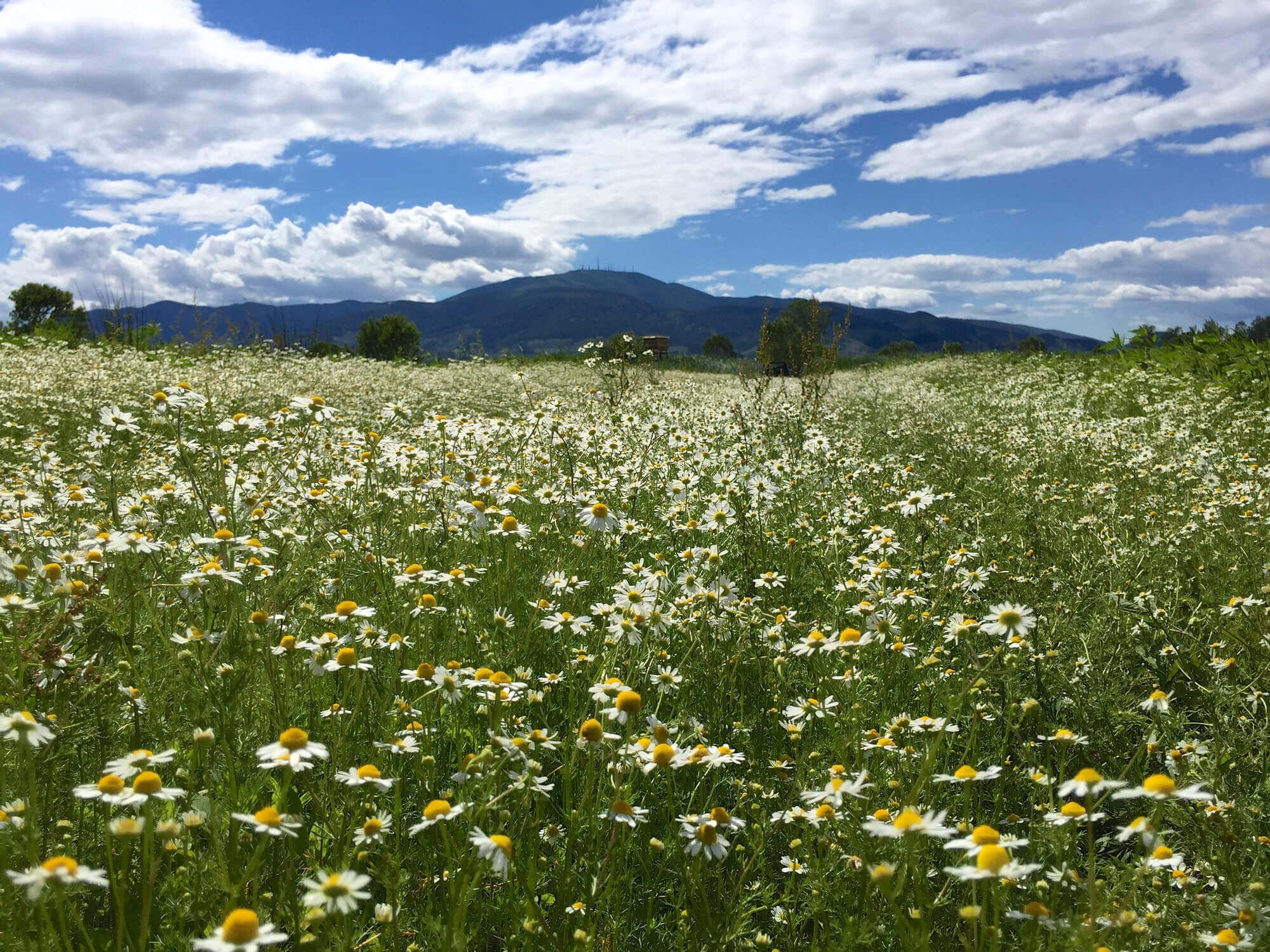 Nature itineraries in Buti