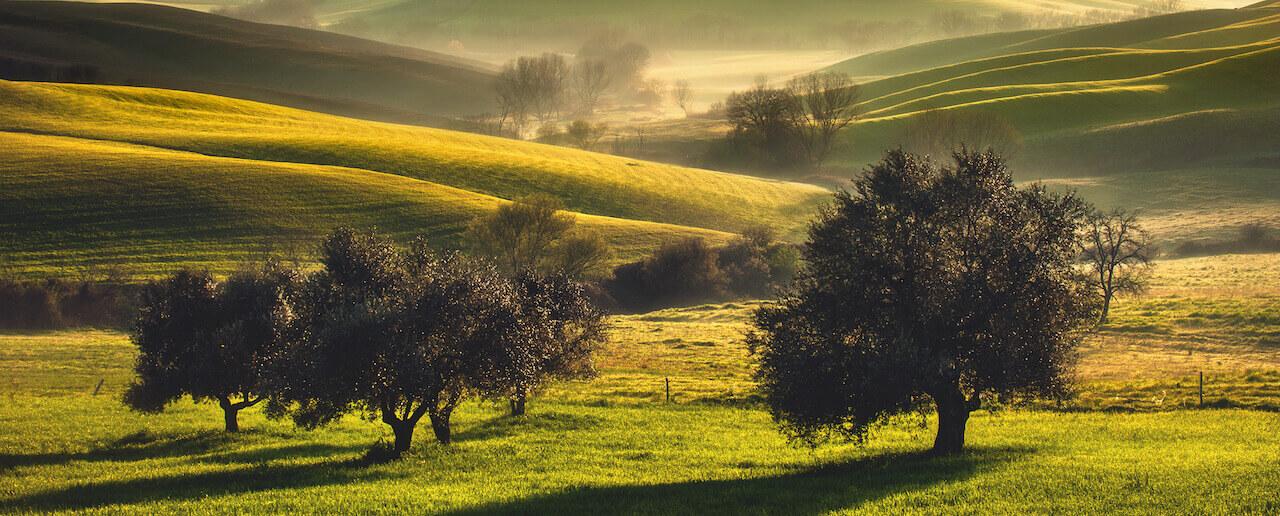 The Monti Pisani Olive Oil Road: