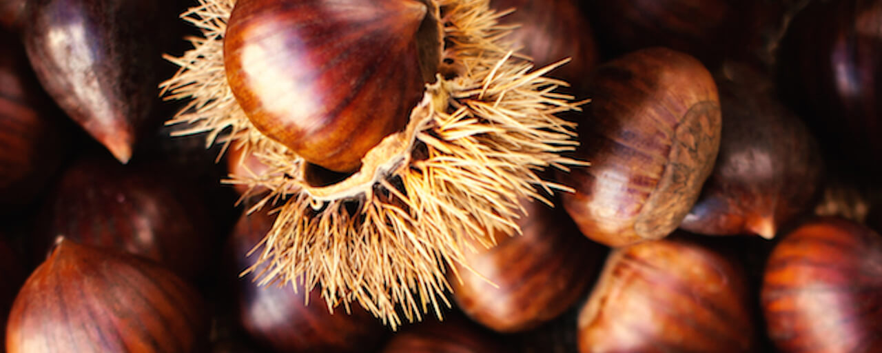 Chestnut Festival, 36th edition | Calci