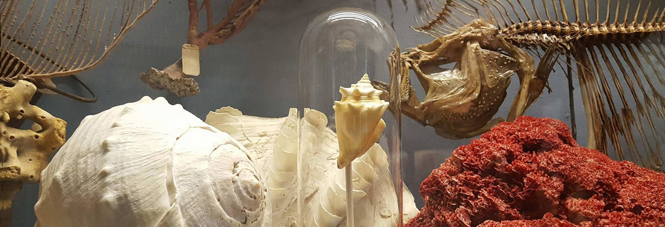 Riaperto il Museo di Storia Naturale | Calci
