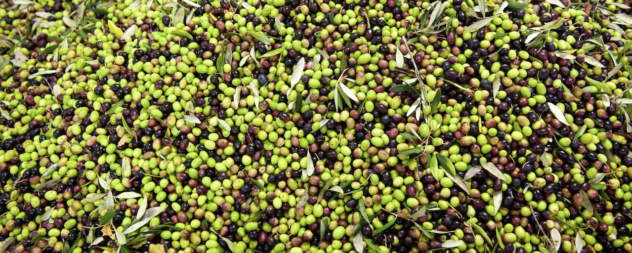 44° Sagra dell'olio novo a Ghizzano | Peccioli