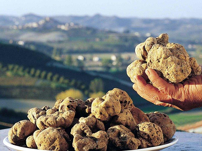 White Truffle Feasts around San Miniato
