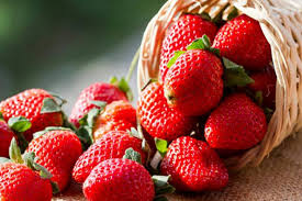 Strawberry Festival, 41st Edition