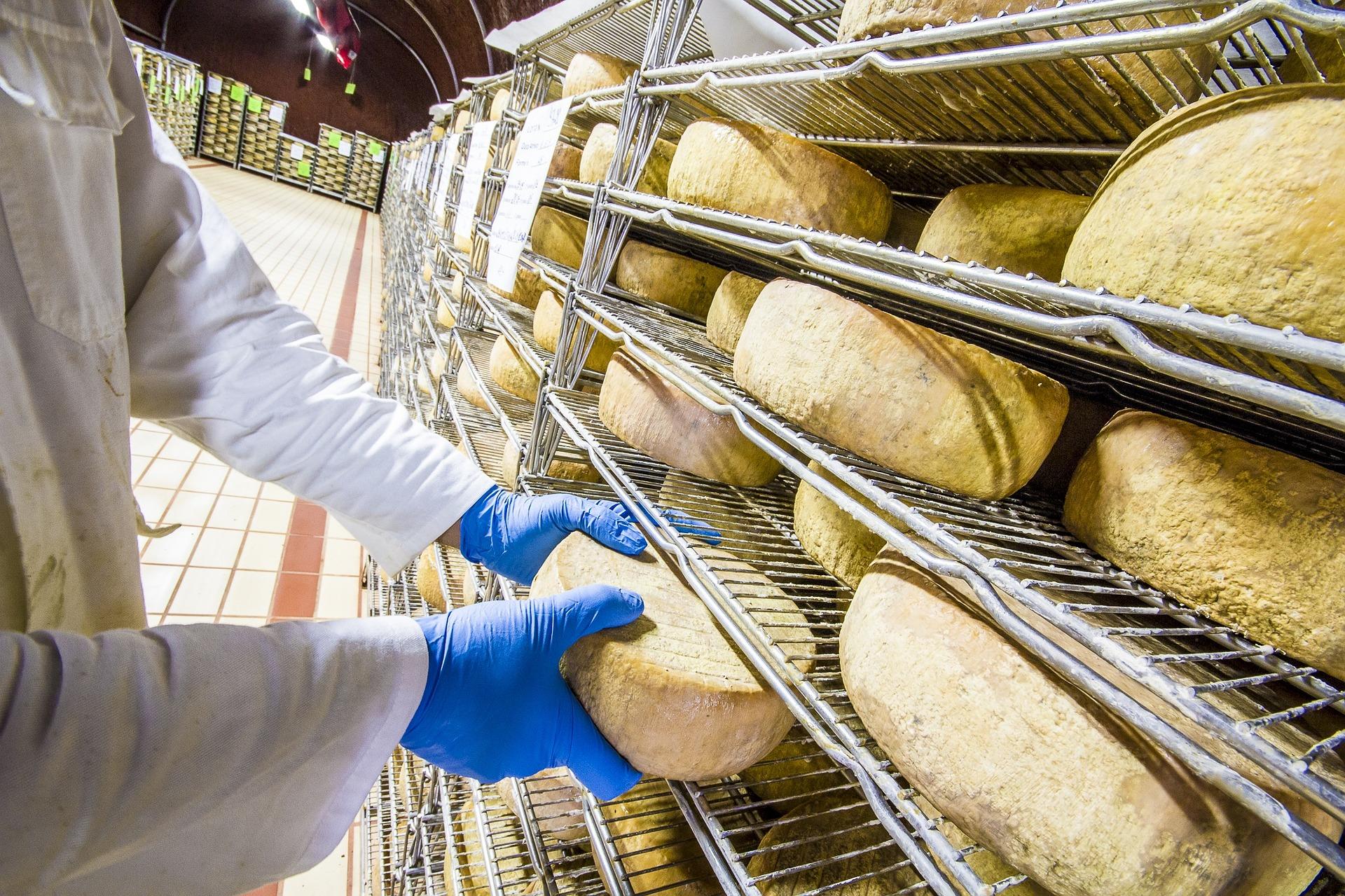 Making cheese in the Terre di Pisa