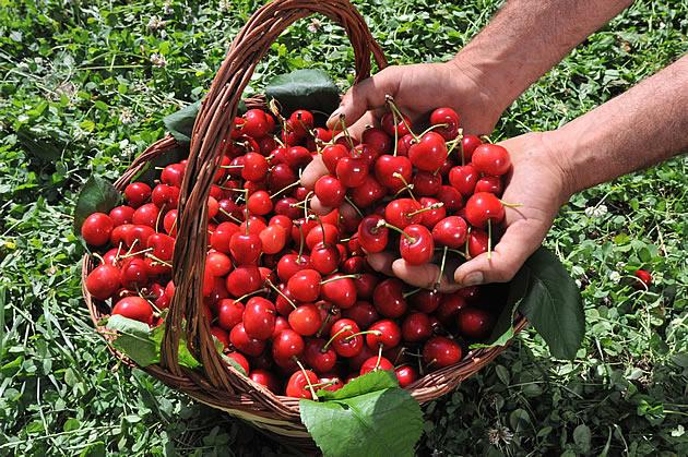 Sagra delle ciliegie, 64° edizione | Lari