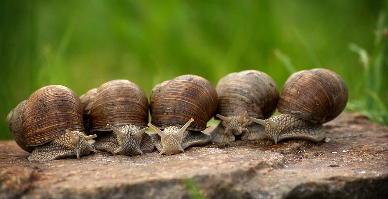 At a snail's pace in the Terre di Pisa