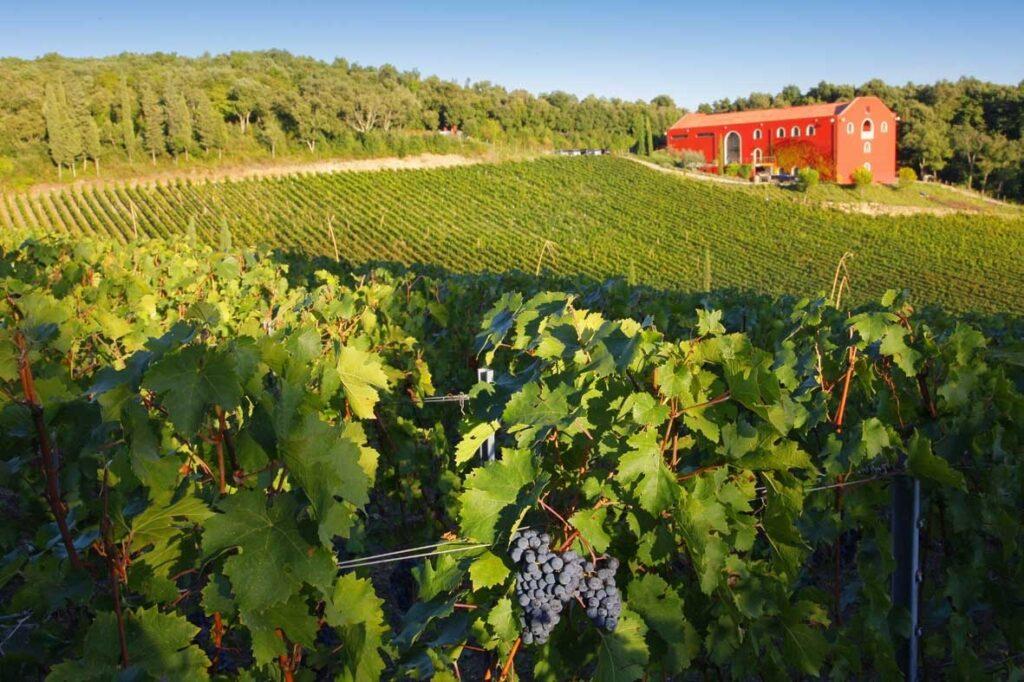 wine architecture riparbella