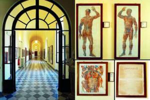 Museo-Anatomia-Umana-Filippo-Civini