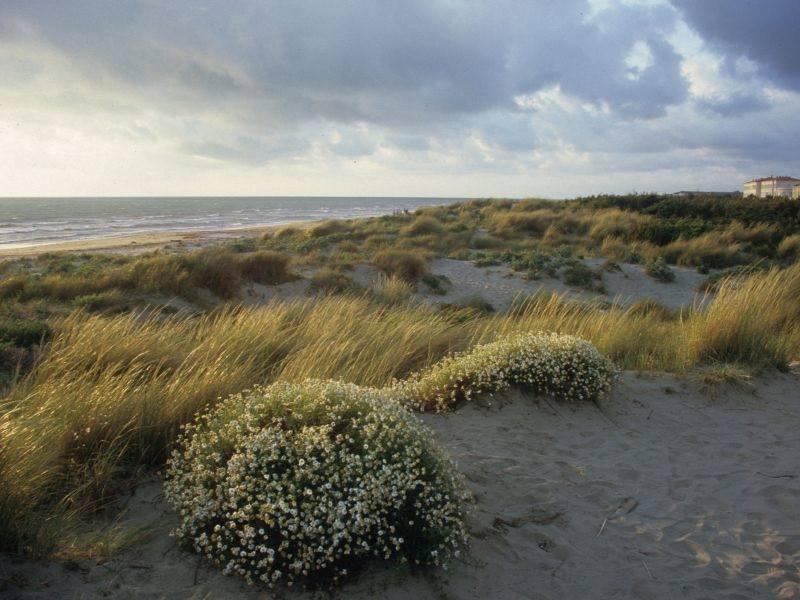 dune tirrenia calambrone pisa