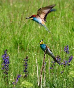 birdwatching vecchiano