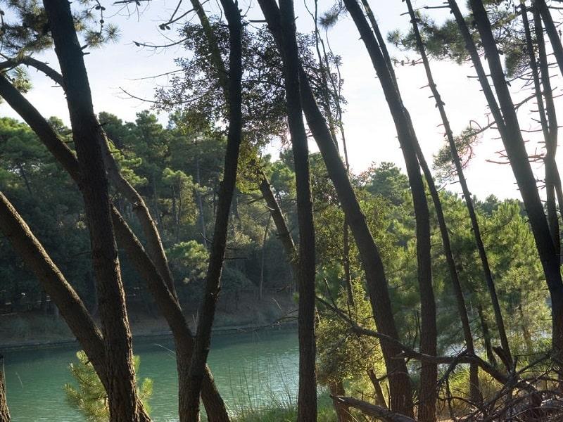 Pesca sportiva sul Fiume Morto | Pisa, Tenuta San Rossore