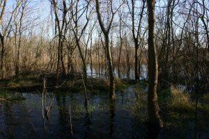 bosco di cornacchia