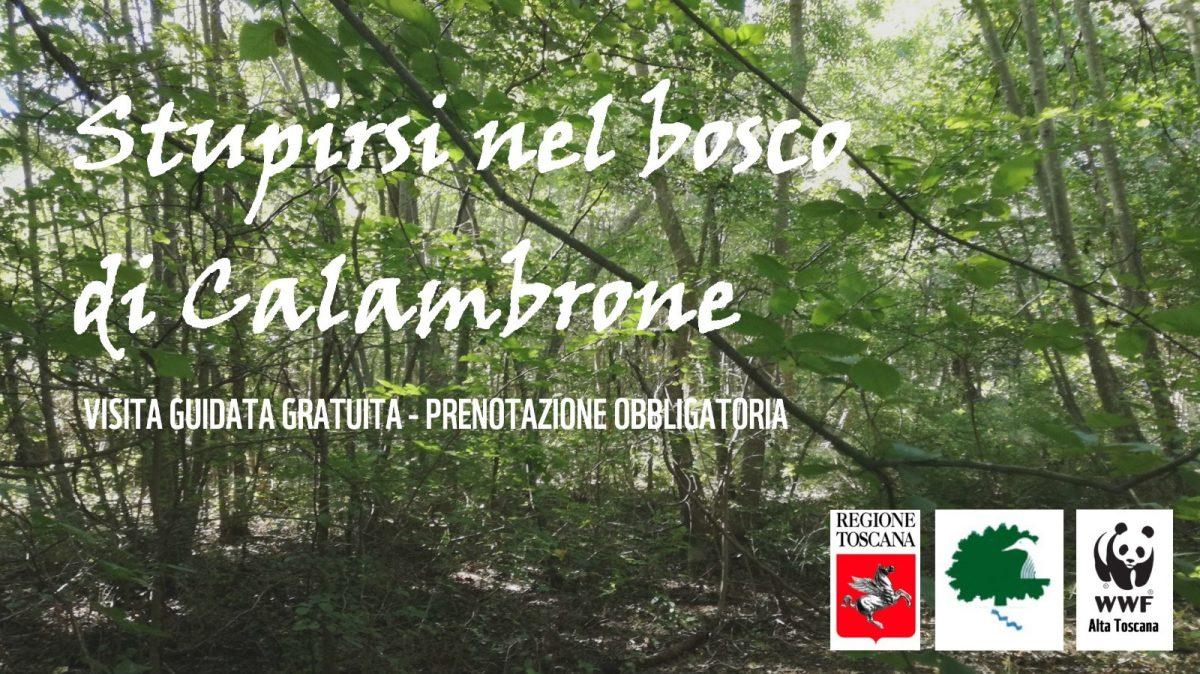 Visite guidate ed eventi speciali all'Oasi WWF Bosco di Cornacchiaia | Pisa, Calambrone